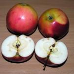 Obelų veislė – LOFEM (LAWFAM)