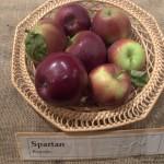 SPARTAN OBELYS – Sodinukai