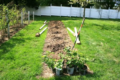 krumu sodinimas