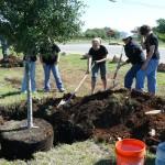 Medžių ir krūmų sodinimas ir priežiūra