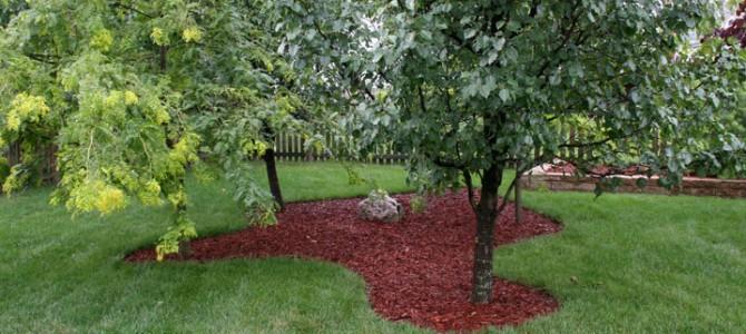 Dirvos dirbimas ir mulčiavimas tarp ir aplink medžius/sodinukus