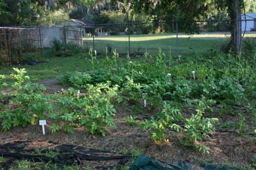 darzoviu sodinimo vietos parinkimas