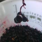 Juodųjų serbentų vynas namie