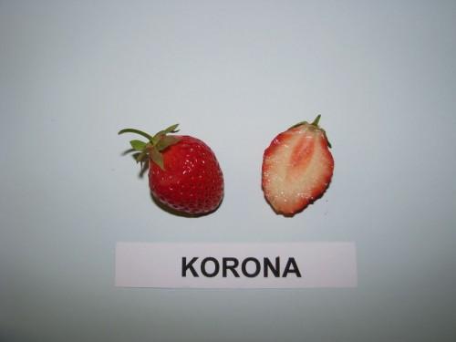 korona braskes