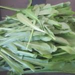 Salotinės cikorijos – kaip užsiauginti salotų sausio mėnesį