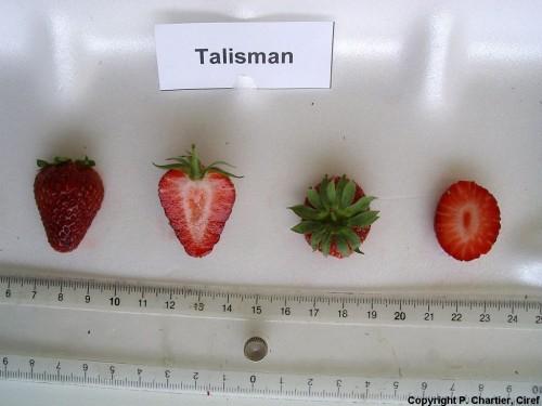talisman braskes