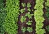 Kaip tinkamai genėti vazoninius augalus ir gėles?