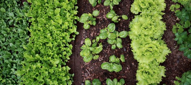 Maisto medžiagos reikalingo augalams ir jų trūkumo atpažinimas