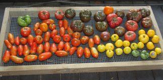 pomidorų maisto medžiagos