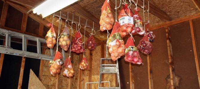 Kaip sandėliuoti ir laikyti svogūnus per žiemą?