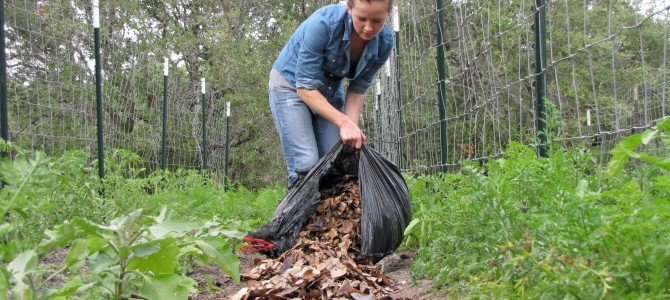 Kaip apsisaugoti nuo piktžolių naudojant mulča