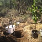 Dirvos paruošimas vyšnių sodinimui