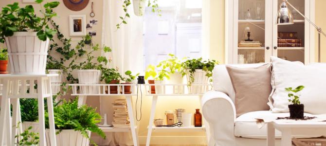 Kokie augalai tinka prie jūsų interjero dizaino?