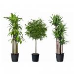Ką galima pasakyti apie augalą iš jo išvaizdos?