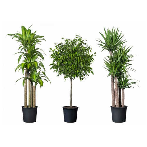 augalu isvaizda