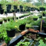Kaip tinkamai prižiūrėti kambarinius augalus?