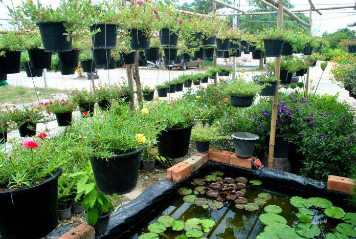augalų parduotuvė