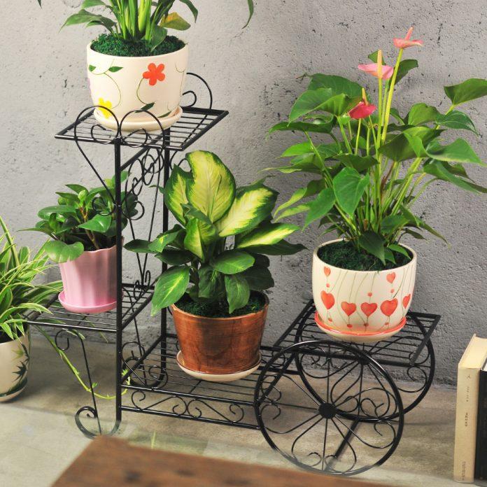 baldai augalams