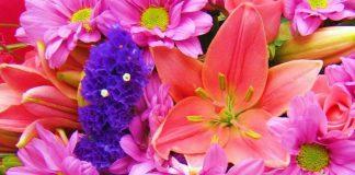 gėlės - mažos ir didelės