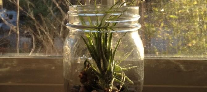 Kaip rinktis, pirkti ir laikyti augalus