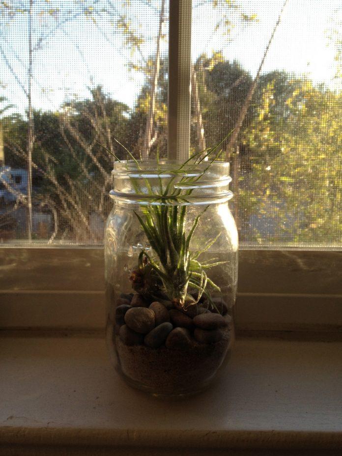 kur laikyti augalus