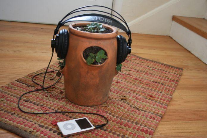 Ar reikia su augalais kalbėtis? Kaip aplinkos garsai veikia augalus?