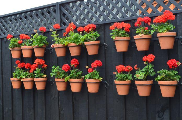 10 geriausių gudrybių kurias turi žinoti visi gėlių augintojai