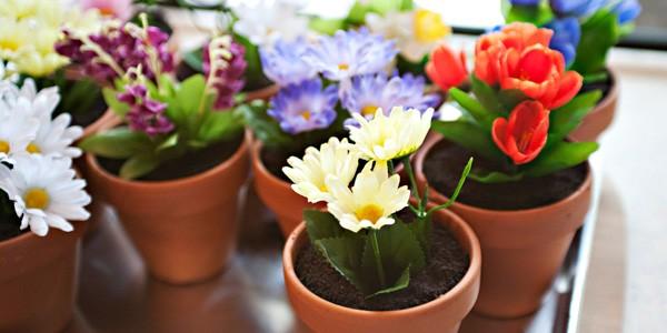 Viskas apie kambarinių gėlių auginimą, priežiūrą, persodinimą, dauginimą, kenkėjus ir ligas