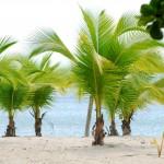 Naudinga informacija apie palmes