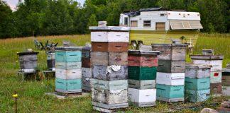 moduliniai bičių aviliai