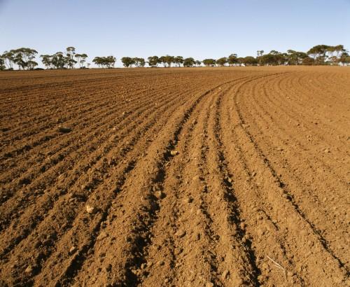 Seeding the soil