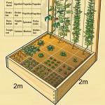 Kaip įsirengti daržą 4 kvadratiniuose metruose?