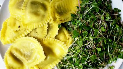 Salotų daiginių derlius