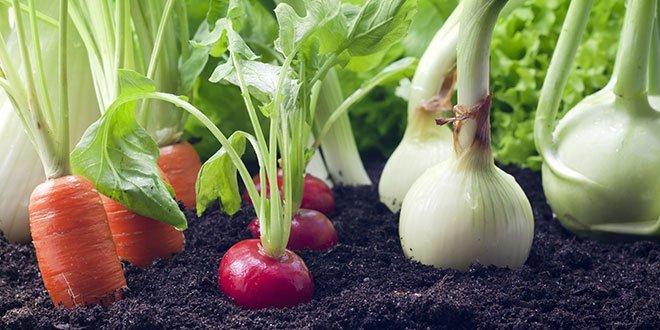 8 nuolatos ataugančios daržovės