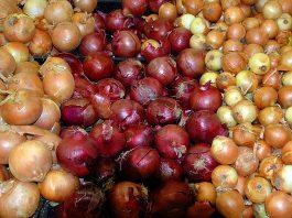 Daugiamečiai svogūnai
