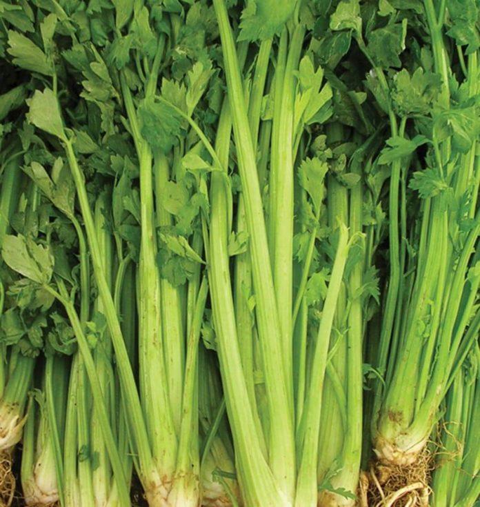 Salierai - sodinimas, auginimas ir priežiūra