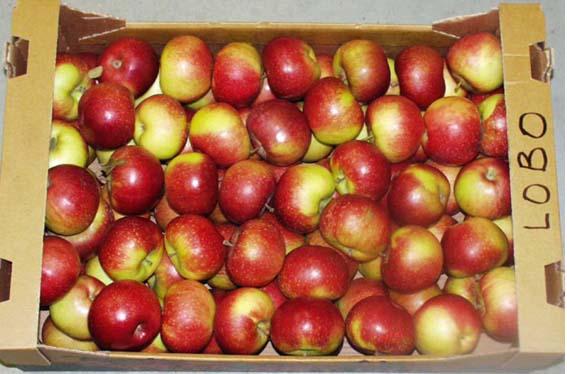 Lobo veislės obuoliai