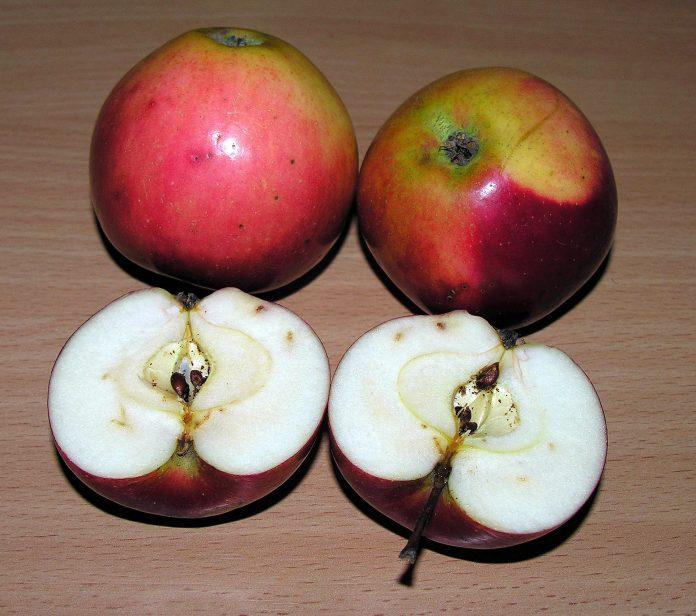 Lofem (Lawfam) veislės obuoliai