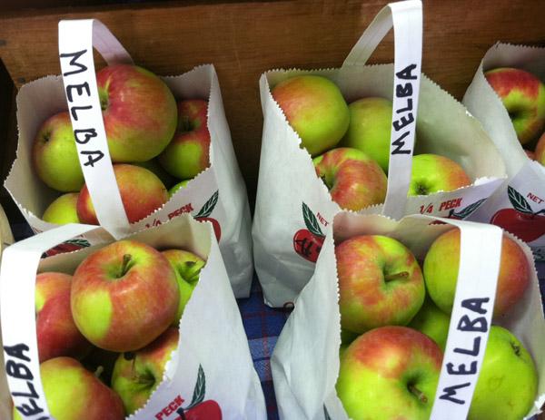 Melba veislės obuoliai